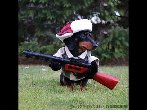This Adorable Dachshund Takes Turkey Hunting Very