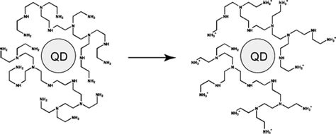 Phase-transfer of CdSe@ZnS quantum dots using amphiphilic