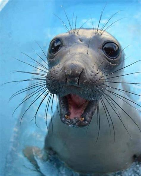 Hilarious Facial Expressions of Animals   Animals Zone